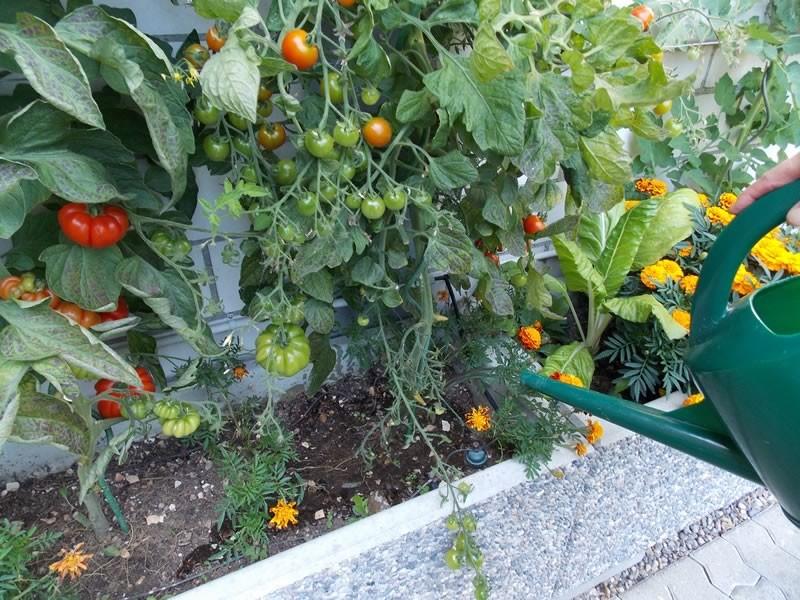 Rauber Kupfer-Hyperbel für's Giesswasser im Garten