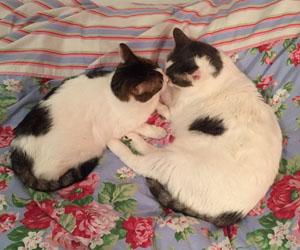 Viktoria & Anouk (Indira und Namaste)