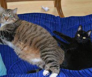 Phanti (Lidia) mit grossem Freund