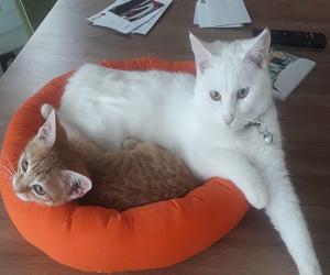 Karim mit Momo