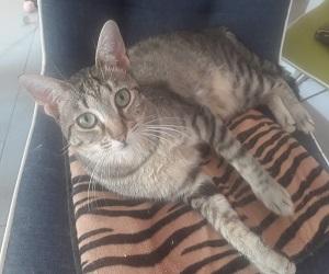 Luchina (Mia)