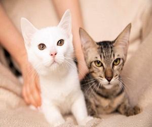 Yumi und Zuko ( Tara und Tarhun)