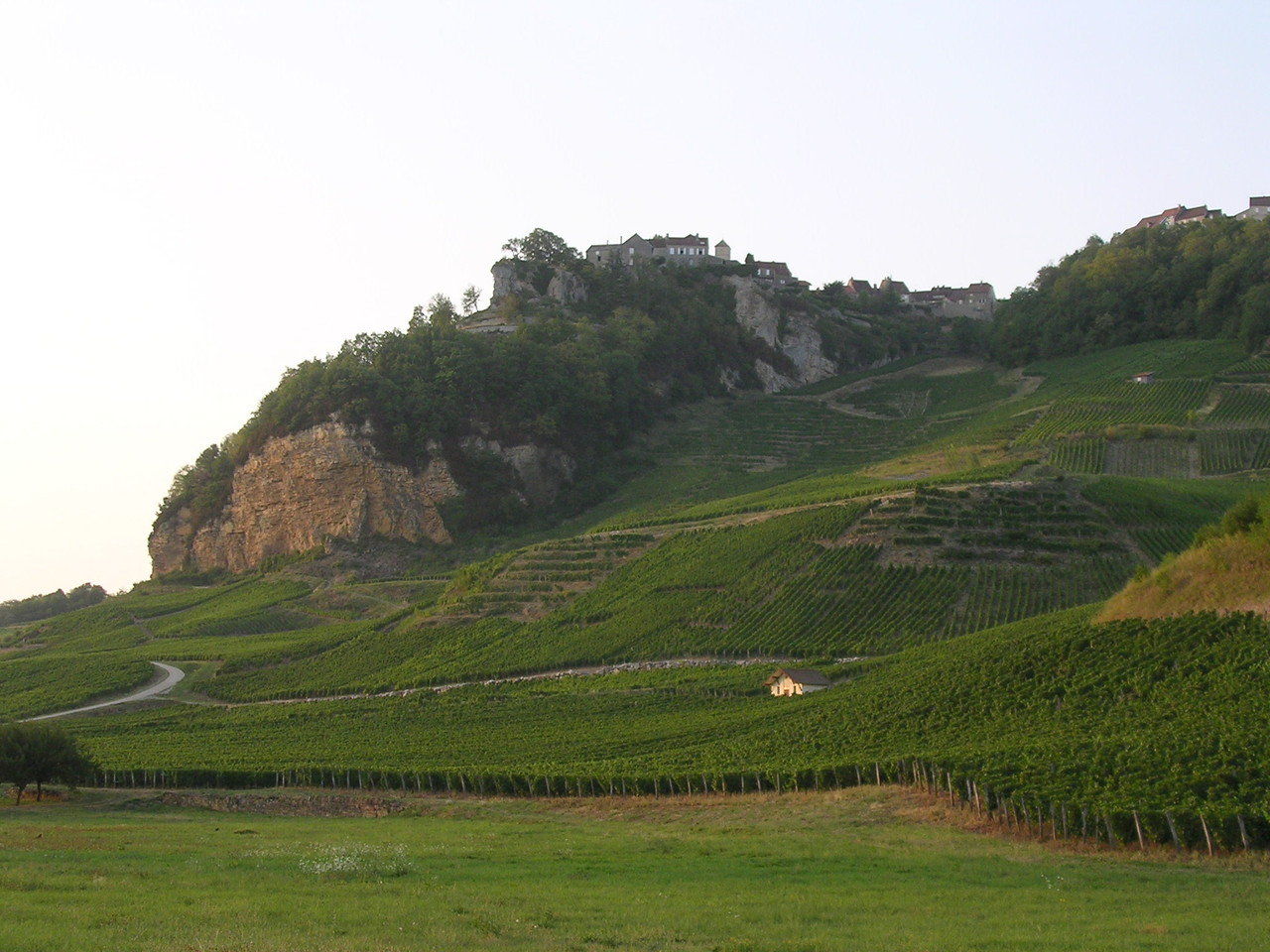 Chateau-Châlon - vineyard
