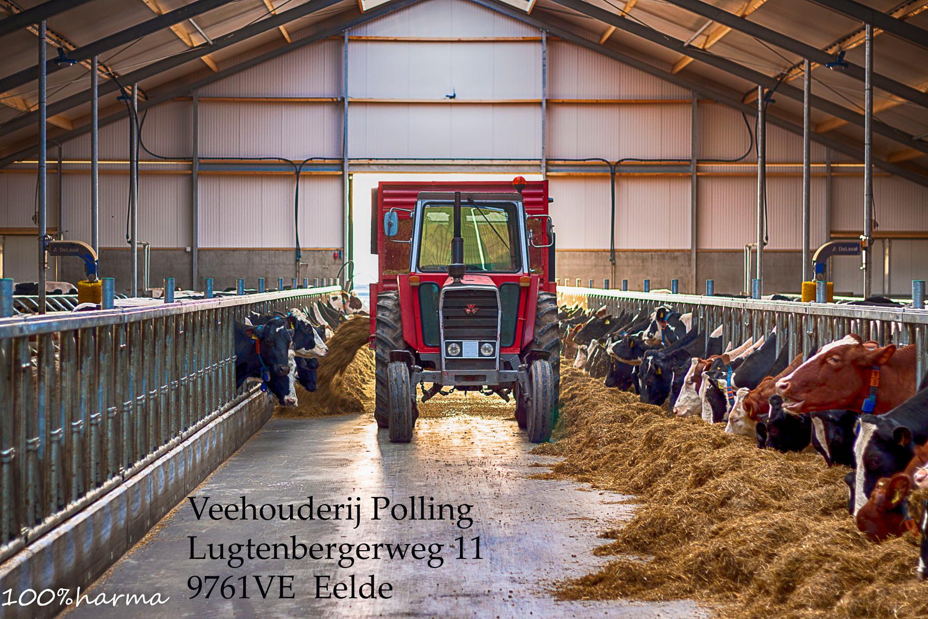Veehouderij Polling Eelde