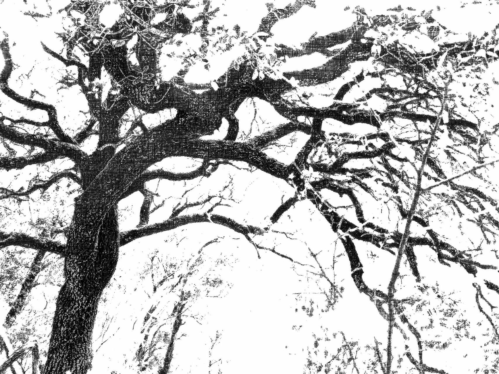 """"""" Arborescences"""" Hélène Phung (non comprise dans le recueil)"""