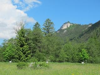 Vils in Tirol - Keltischer Baumkreis mit Labyrinth