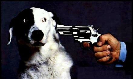 Le chien qui aboie sur son maitre ! Comment s'en sortir ?