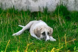 Comment gérer l'intolérance à la frustration chez mon chien ?