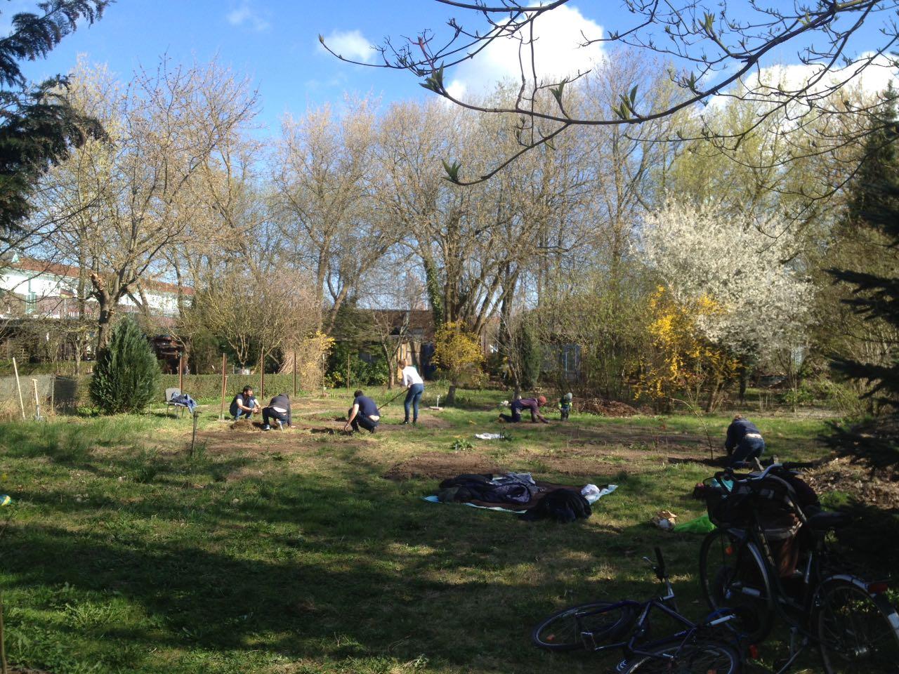 Bei bestem Frühlingswetter trafen wir uns am 09. April im Garten, um den Zaun weiter zu bauen und die ersten Beete zu bepflanzen.