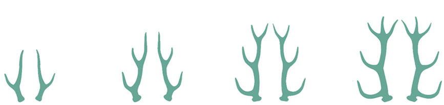 Gönnerkategorien 4-Ender, 6-Ender, 8-Ender, 10-Ender