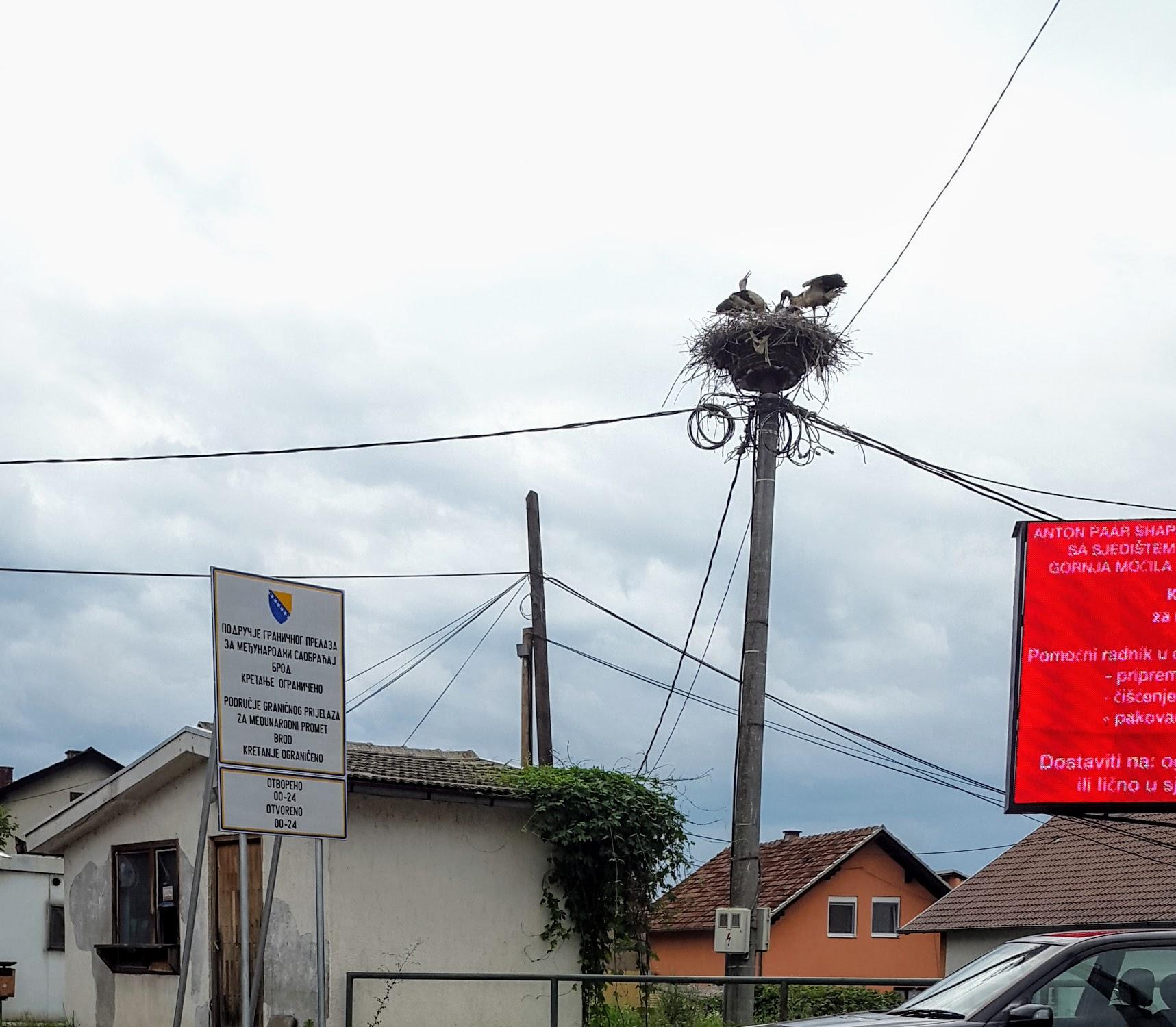 Storchennest an der Grenze zu Kroatien