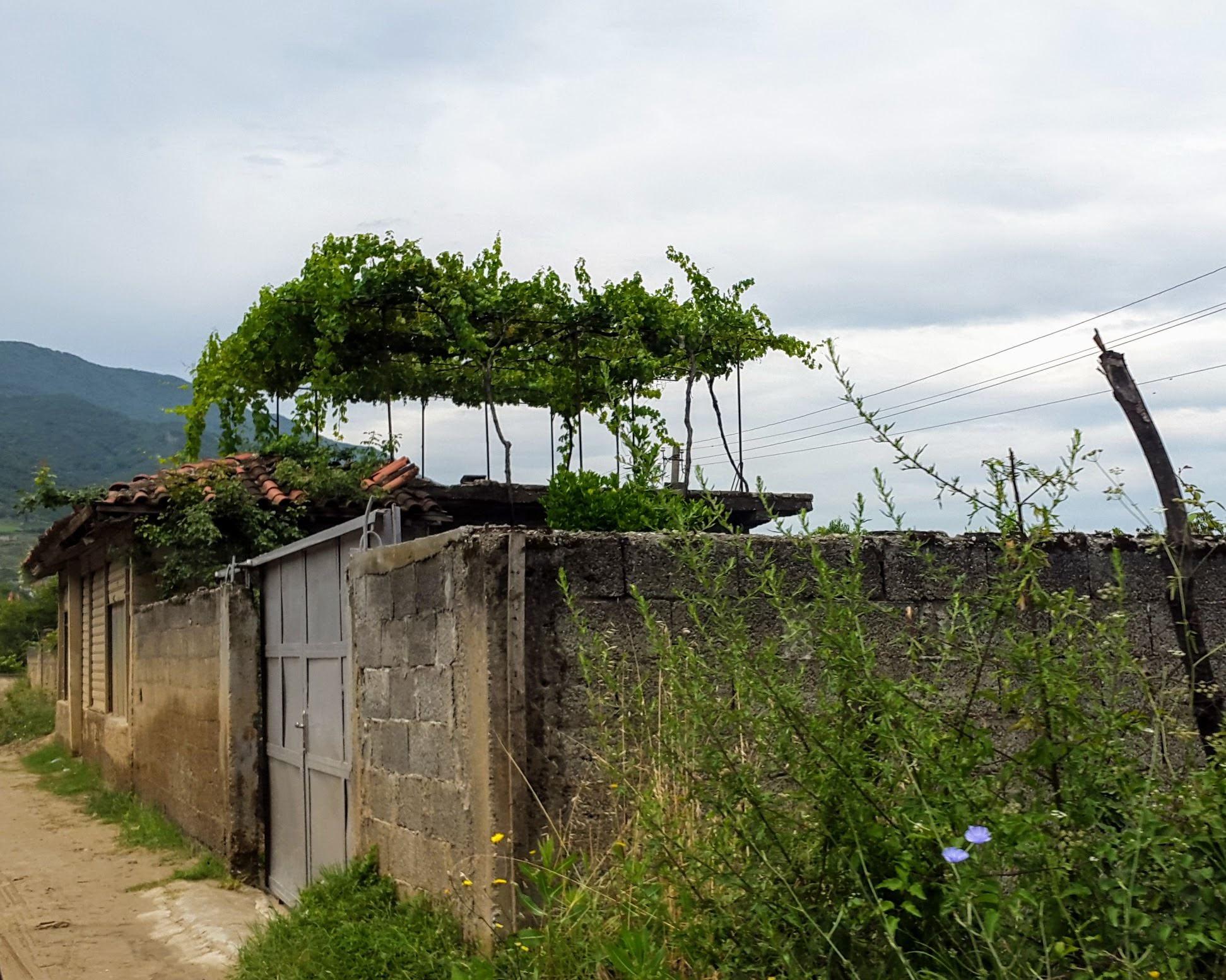 Eines von vielen weinbewachsenen Dächern