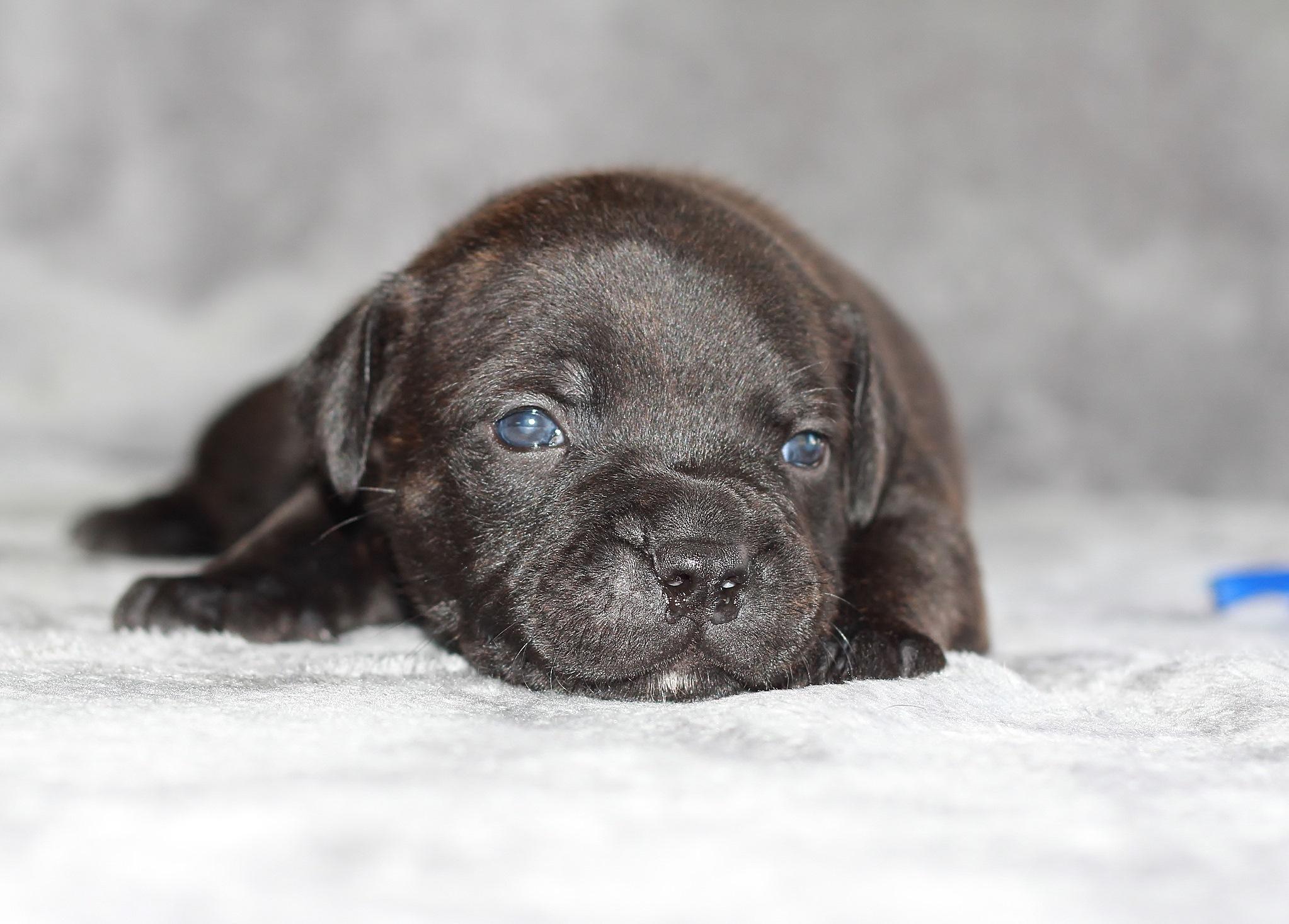 blue boy 21 days old