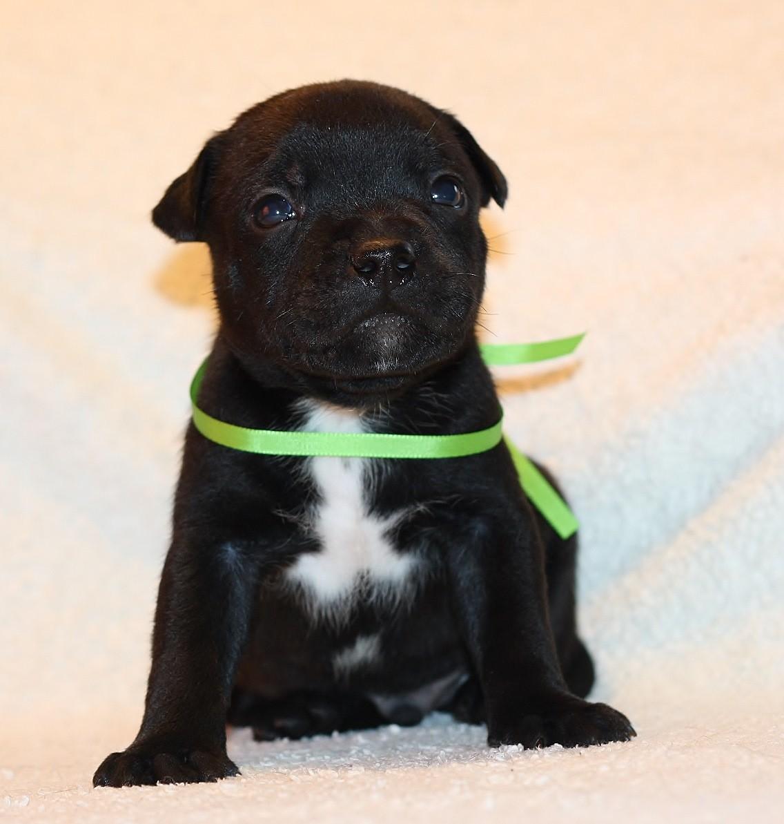 green boy 26 days old