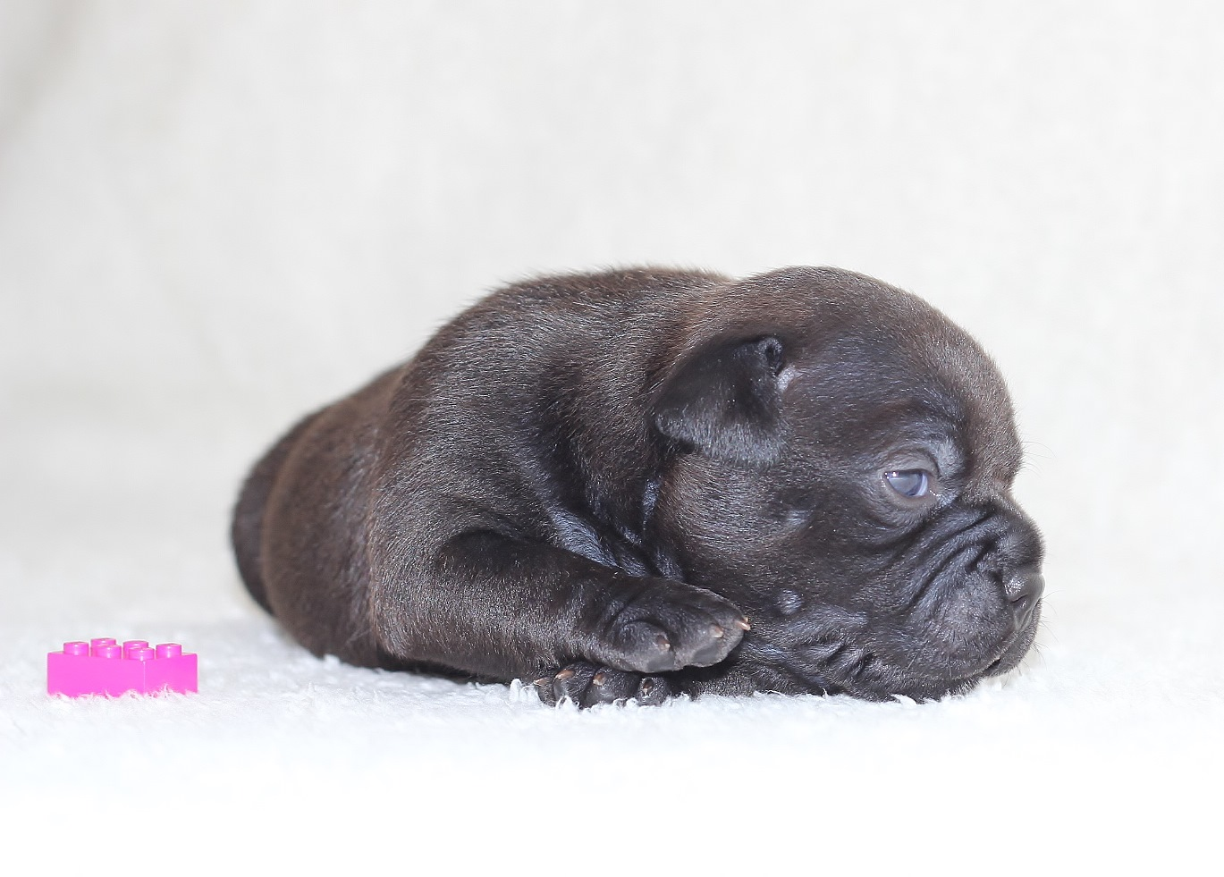 pink girl 19 days old
