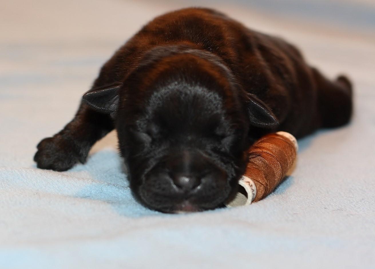 brown boy 3 days old