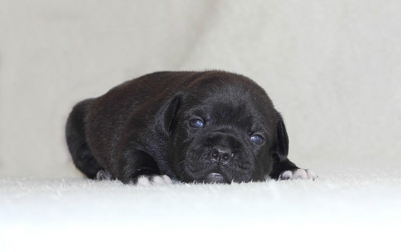 boy 19 days old