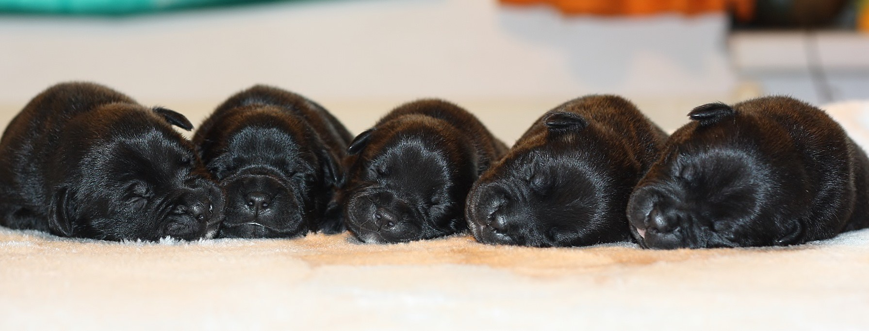and our babies boys  8 days old