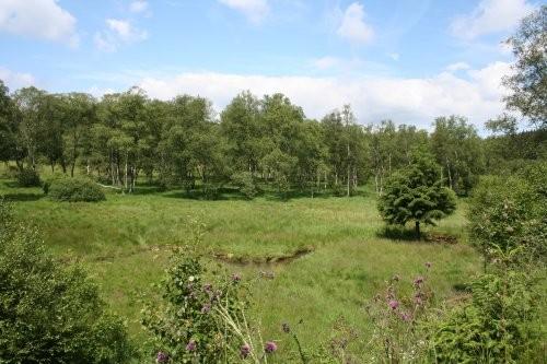 """Blick über das Grundstück vom Rothaarsteig aus, im Hintergrund der """"Eicherwald""""."""