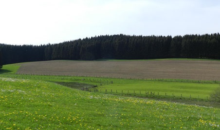 Maisanbau bis an das Brutgebiet der Wiesenbrüter