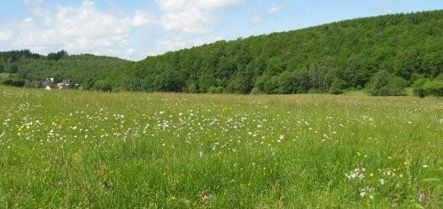 Von artenreichen Wiesen wurde das Saatgut gewonnen. (Foto: Eva Lisges)