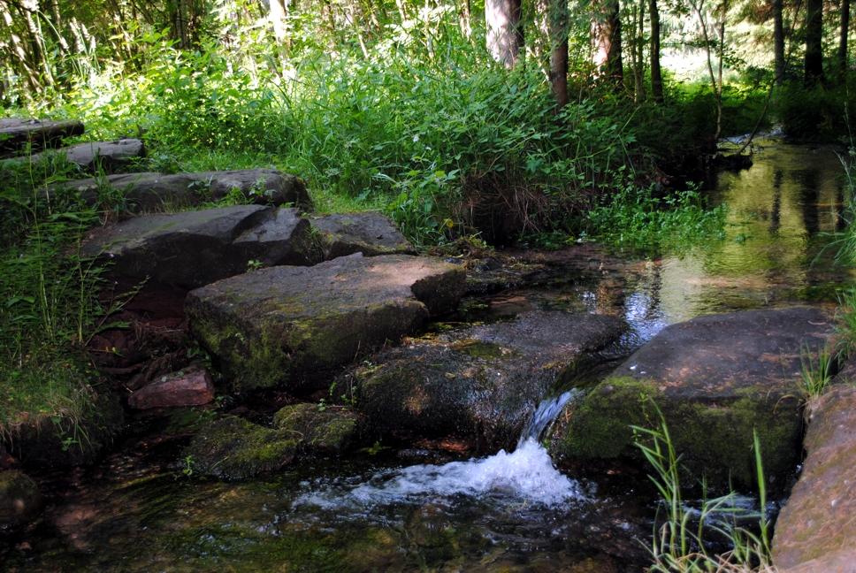 Bach beim Waldsee in Waldachtal Lützenhardt