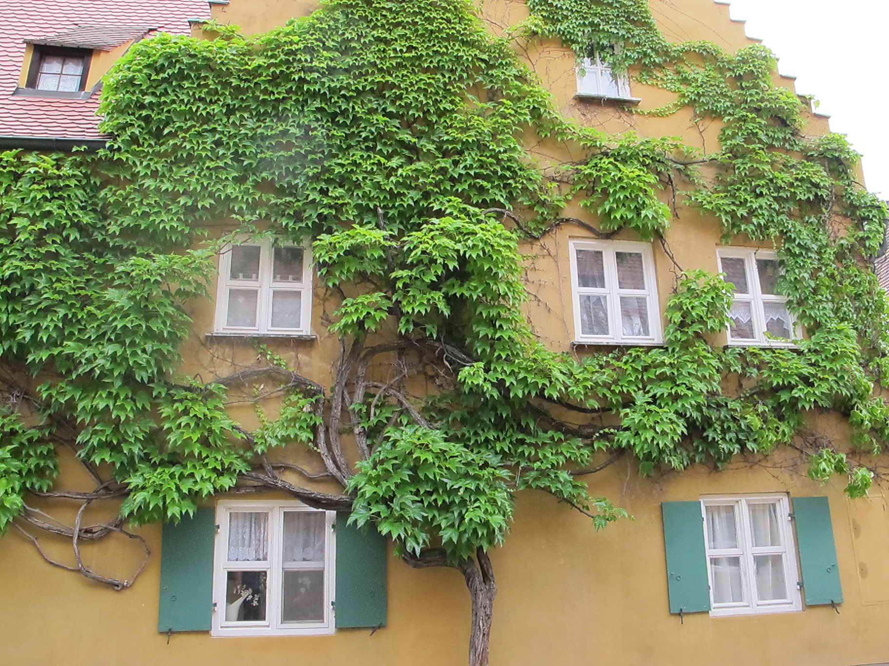 grüne Aussichten