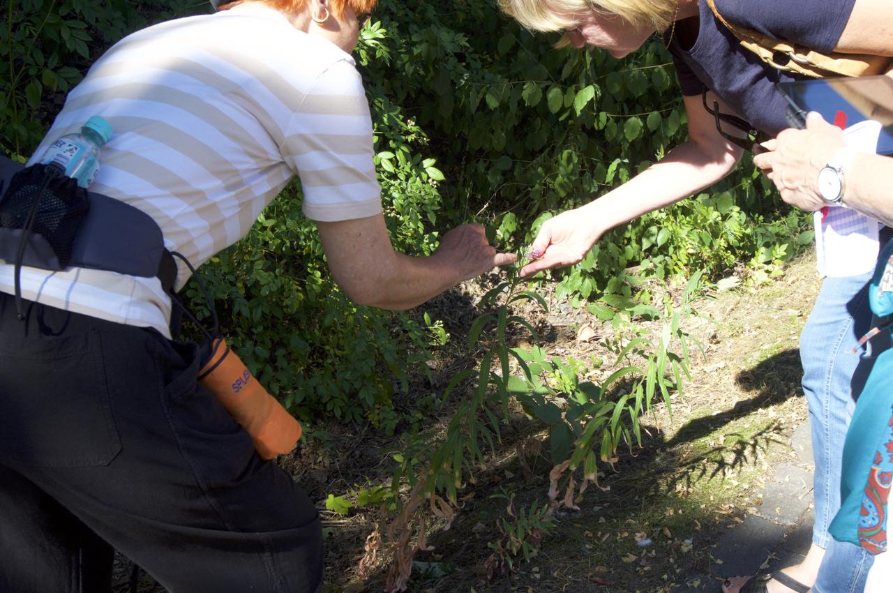 Teilnehmer erkunden eine Pflanze