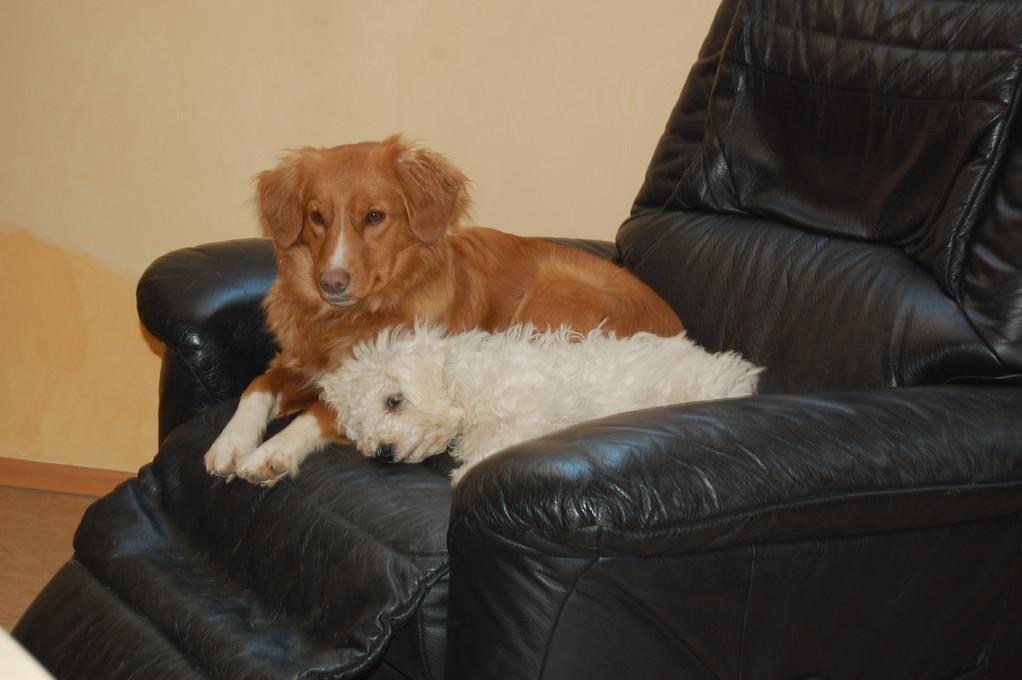 Paytoo hat einen neuen Freund *Maxi*