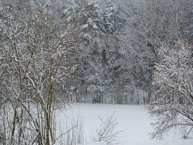 Die Aussicht im Winter