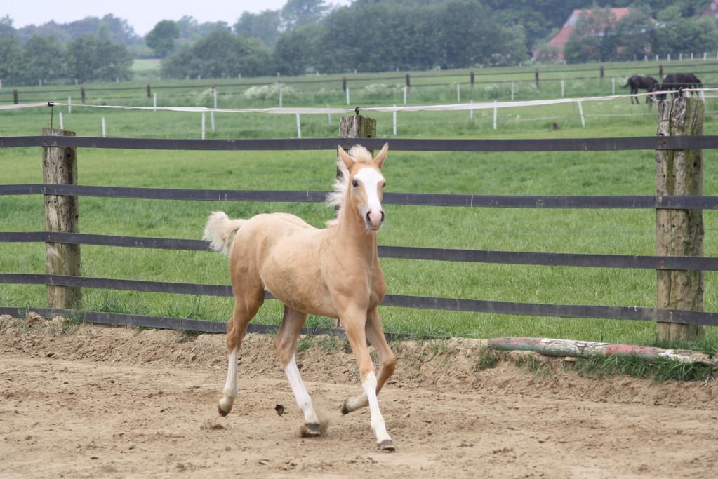 Toller Ponynachwuchs