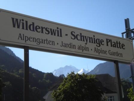 Abfahrt mit em Zügli ds Wilderswil für uf die Schynige Platte.