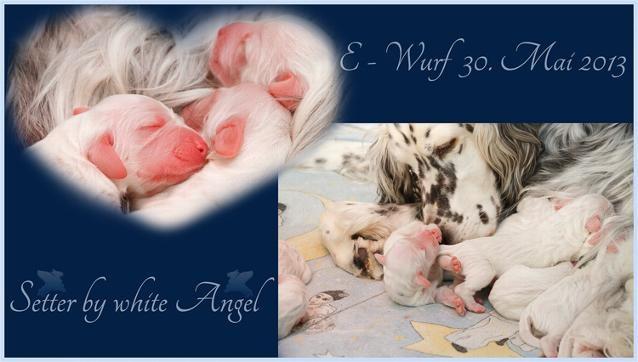 Der E-Wurf der Setter Angel ist da | www.angel-setter.de