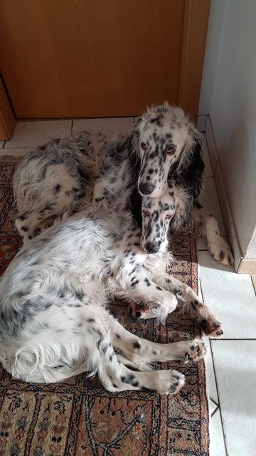 Indigo mit 2.3 Jahren und Kent mit 6 Monaten