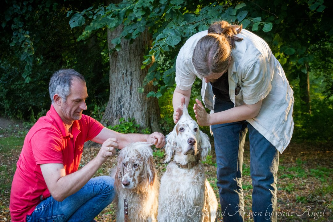 Settertreffen 2015: Fiene und Aragon, zwei sehr geduldige Setter.