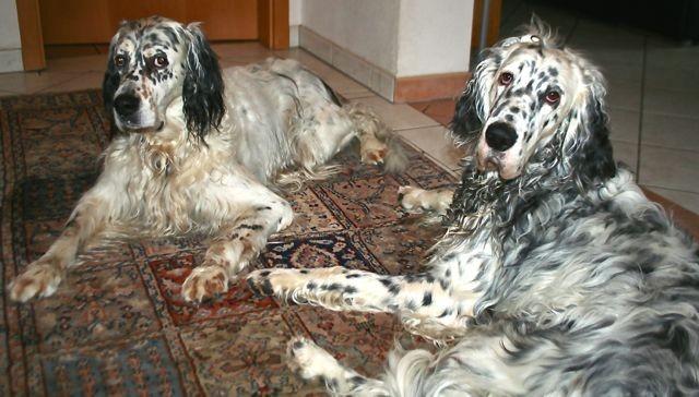 Barry mit seinem Freund Indego(Walko)