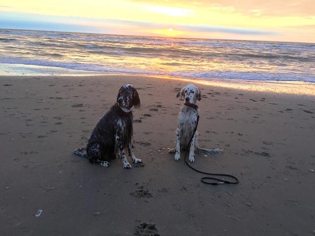 Golda und Chanouk, wir sind an der Nordsee. HD frei