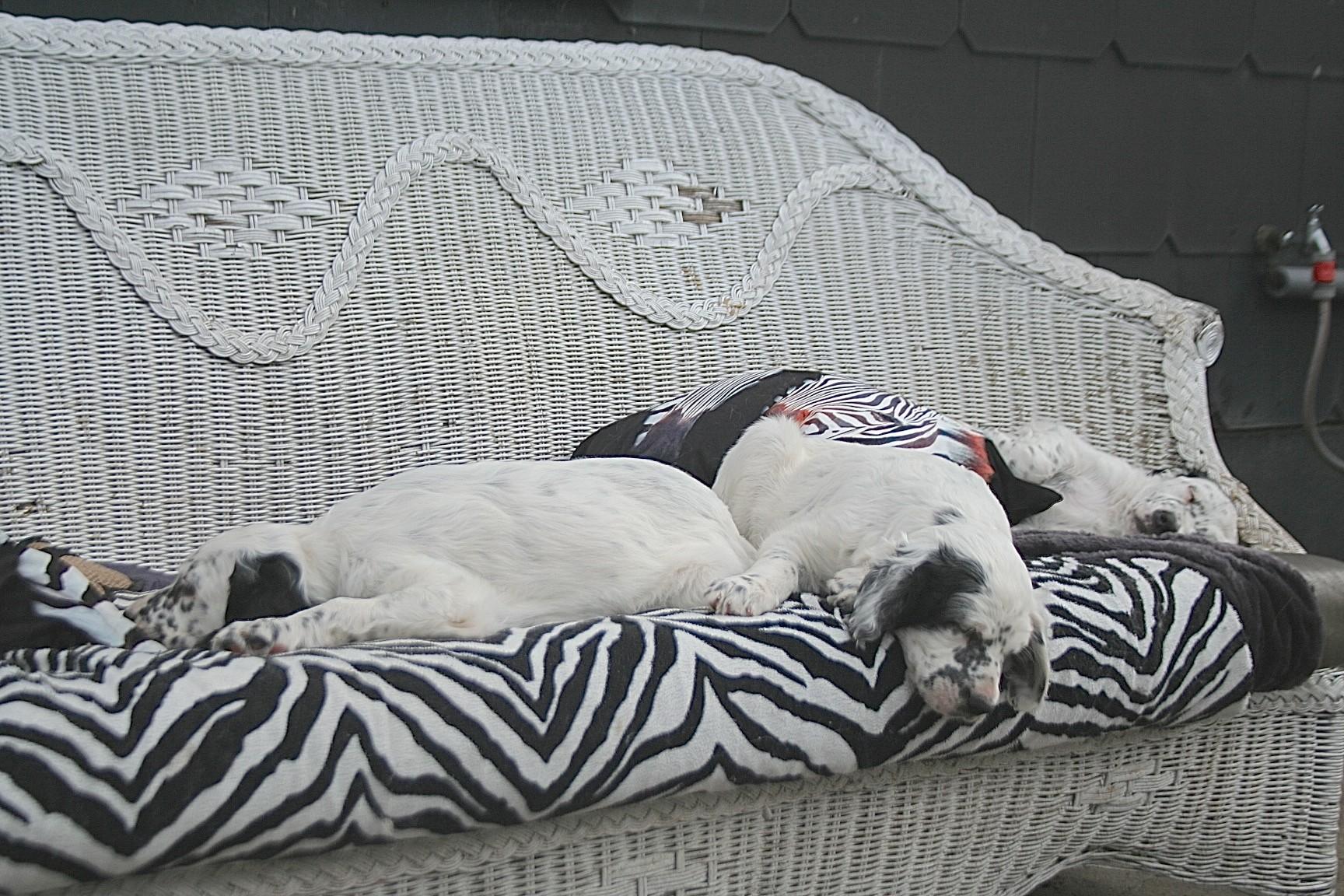 Alle Jungs wollten draußen auf dem Korbsofa schlafen.