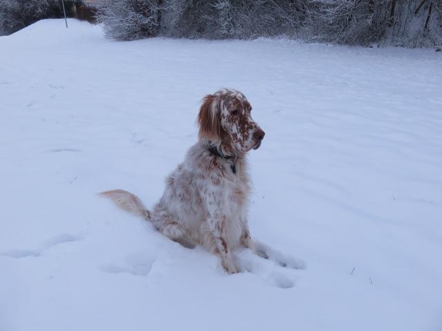 Schnee, Schnee hier in Bayern gibt es ja genug und das ist super für mich.....