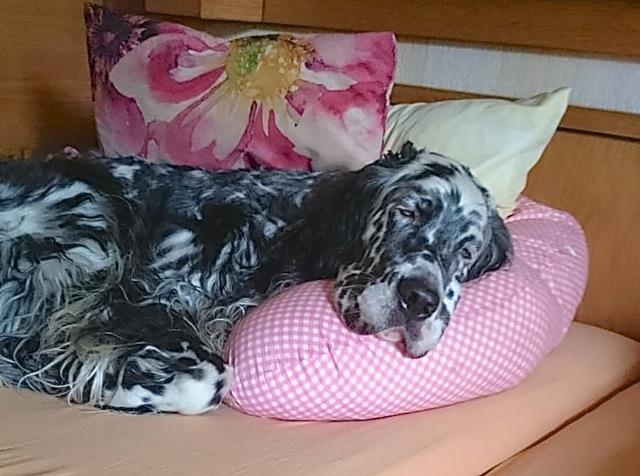 Oh schöne Bettwäsche, so hab ich es am liebsten!