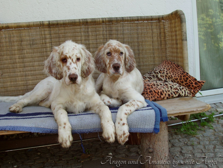 Aragon und sein Bruder Amadeus.
