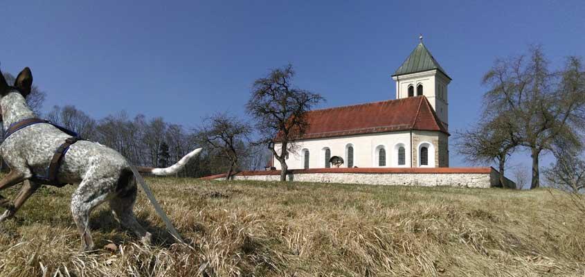 Ein kurzer Blick auf St. Magdalena und weg - Hunde genießen Kunst und Natur.