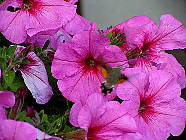 Im Blumenkistl