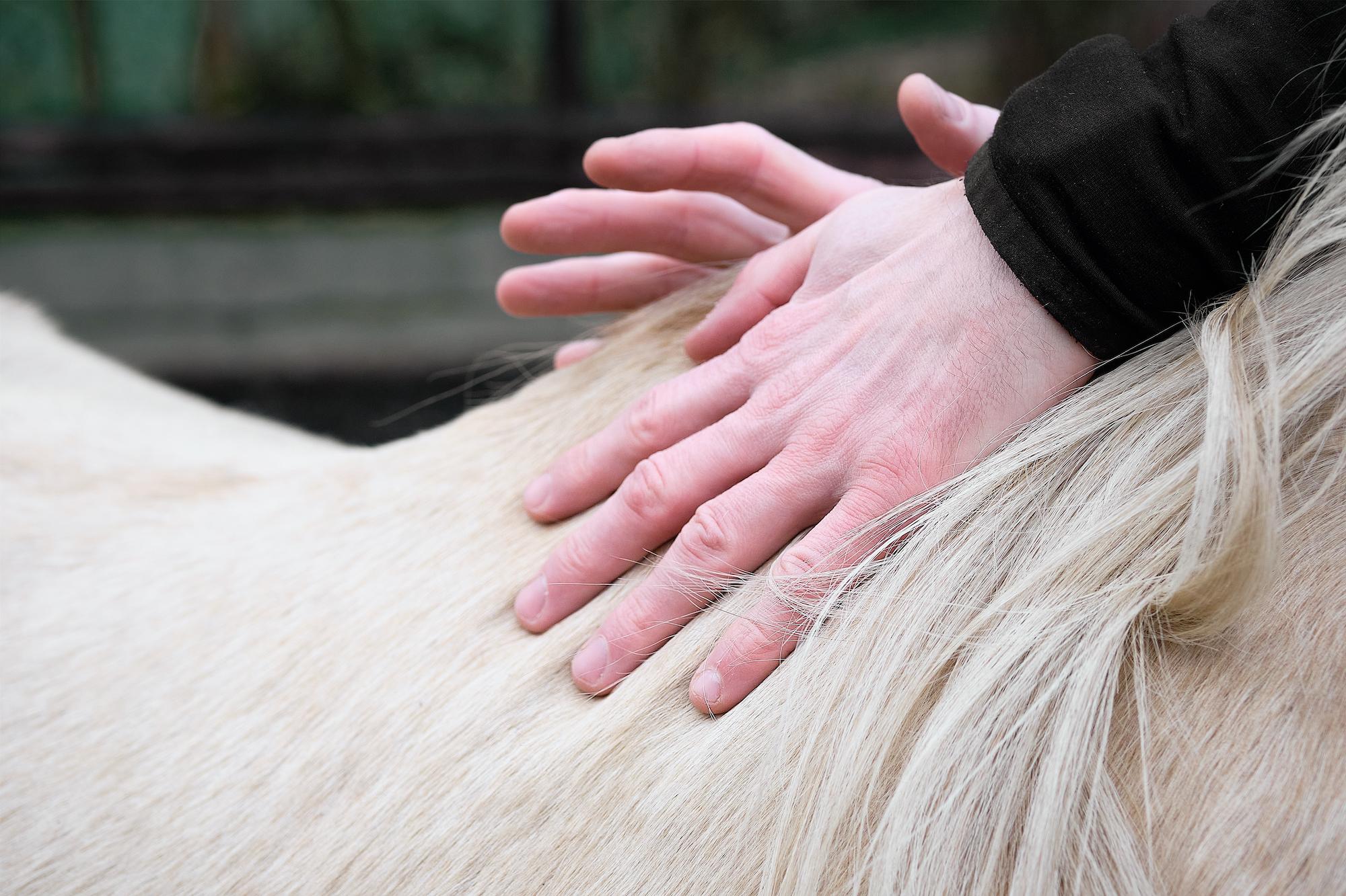 Video - Interview: Fragen zur Faszien Therapie am Pferd