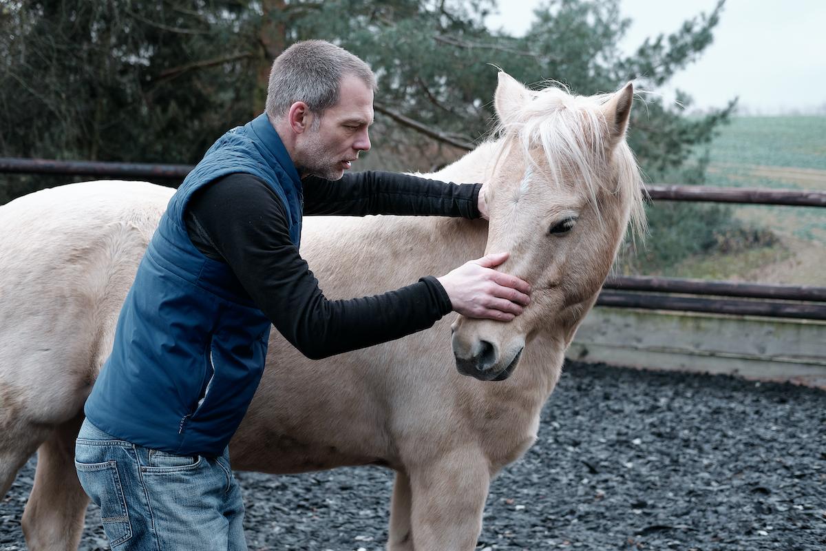 Steifer Reiter - steifes Pferd. Was wir Reiter tun können, um die Losgelassenheit unseres Pferdes nachhaltig zu fördern