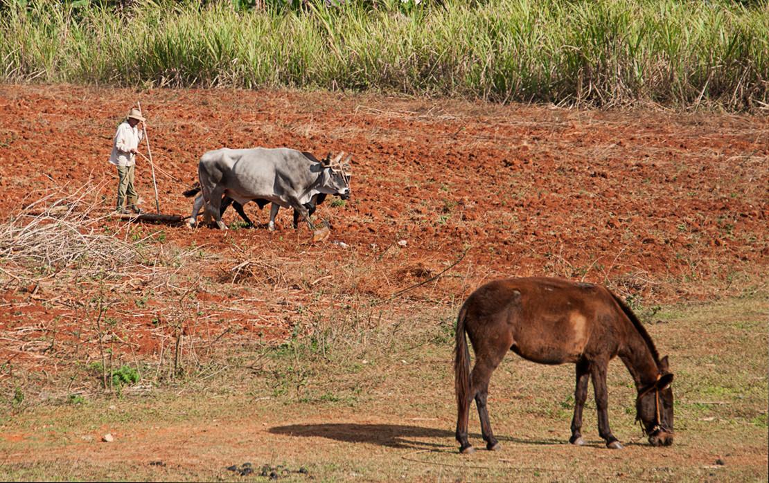 Feld mit Pferden