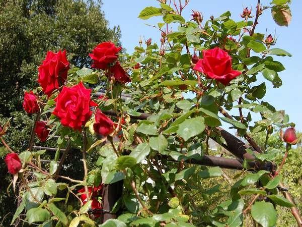 春と秋にはバラが楽しめます♪