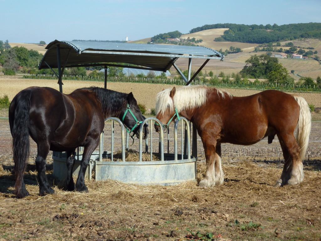 Les chevaux à la ferme