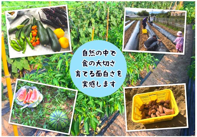 糸島夢農園トップページ