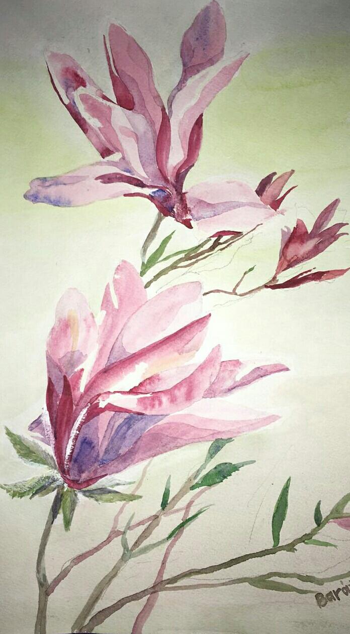 Magnolien, Aquarell, 30x40, € 70,00